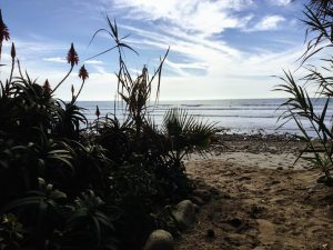 Old Mans Bamboo Garden San Onofre Surfing Beach
