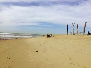 Lower Trestles Beach Art