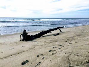 Lower Trestles driftwood
