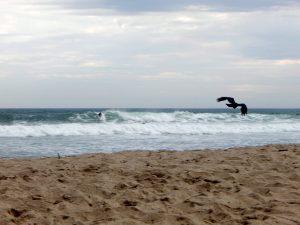 Lower Trestles Beach Crows