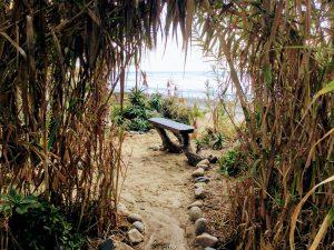 Bamboo Garden Heaven San Onofre State Beach
