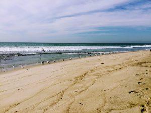 Lower Trestles Beach Birds