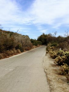 Panhe Nature Trail San Onofre State Beach