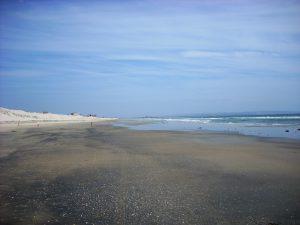 Gator Beach Coronado Island San Diego CA
