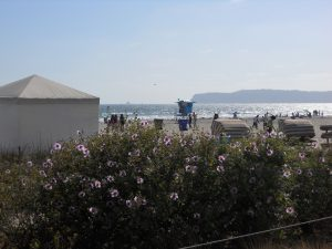 Coronado Island San Diego Ca