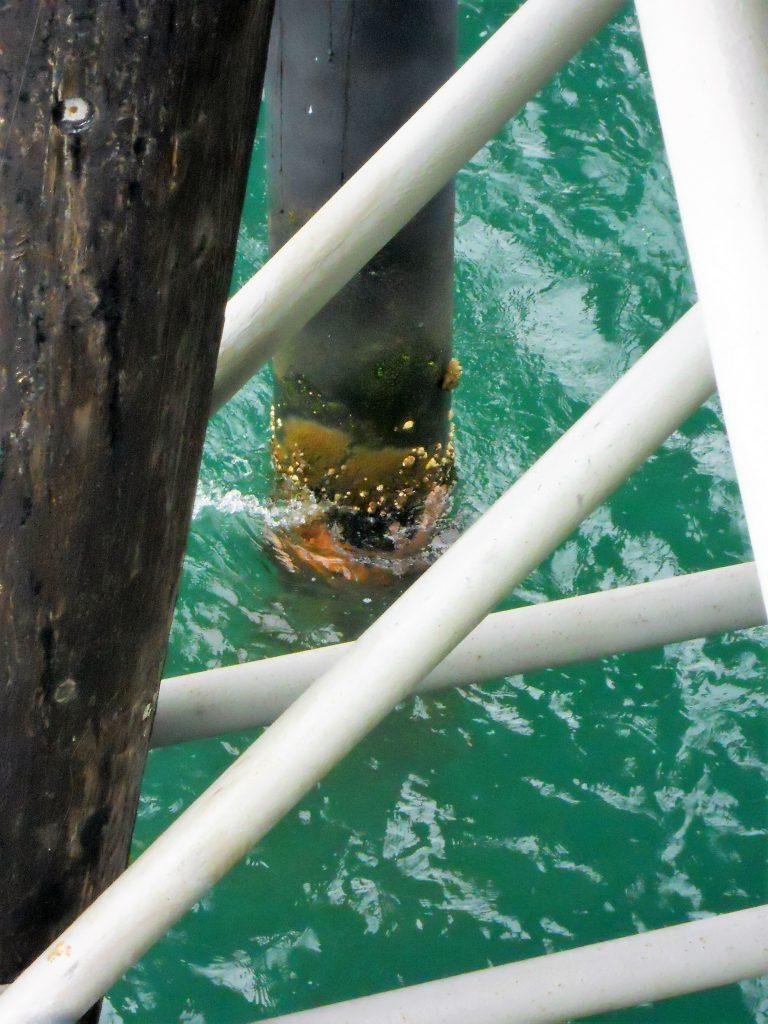 oceanside pier piling