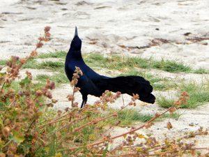 Blackbird San Onofre State Beach