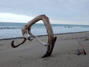 Driftwood Standing Trails Beach