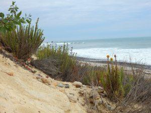 San Onofre Bluffs Trails Beach