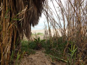 Old Mans Bamboo Garden San Onofre State Beach