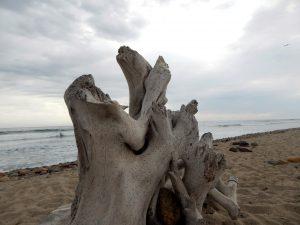 Lower Trestles Driftwood Surfboard holders