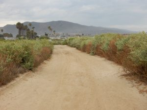 San Onofre State Beach Trail