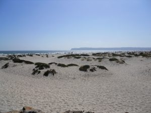 Coronado Sand Dune Coronado Island San Diego CA