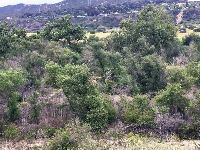 Trestle Beach Trail Riparian plant communities