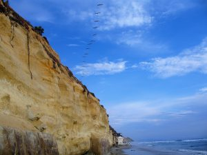 Pelicans Over Stonesteps Beach