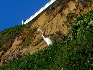 Great Egret Bluff D Street Bluffs