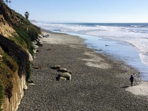 South View Grandview Beach Beaches of Encinitas