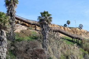 San Elijo Staircase Bluffs Palm Trees