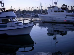 Oceanside Harbor San Diego whale watching tours