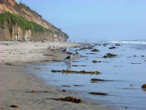 D Street Beach seagulls seaweed