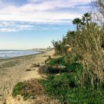 Old Mans Beach bamboo garden palm trees succulants