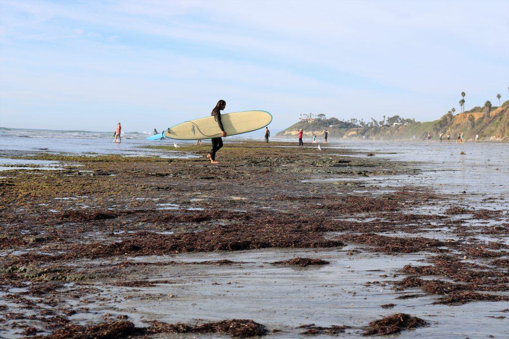Surfing Cardiff State Beach reef surfer walking seaweed