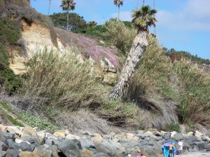 Boneyard Beach Palm Tree Beaches of Encinitas