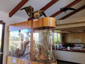 Nature Center Bird Display