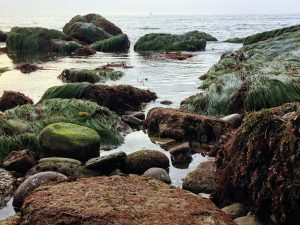Low Intertidal Cabrillo National Monument