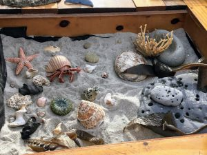 Tidepool specimen shells in box