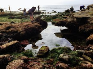 Cabrilllo National Monument Tidepools