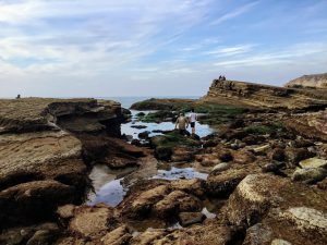 Tidepools Cabrillo National Monument
