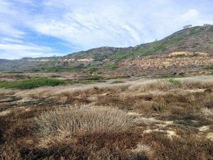 East view coastal sage scrub bluffs