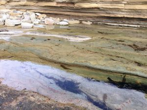 High Intertidal Pools Cabrillo National Monument