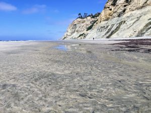 Blacks Beach La Jolla Shores Beach