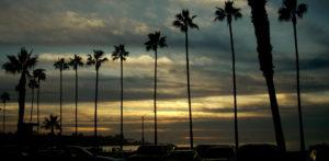 La Jolla Shore Palm Tree Sunset