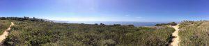 Scripps Coastal Reserve Panoramic