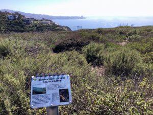 Scripps Coastal Reserve plants ocean