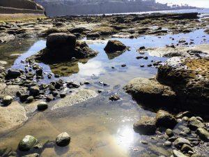 South La Jolla Shores Beach Tidepools