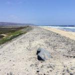 Tijuana Slough Beaches of San Diego County