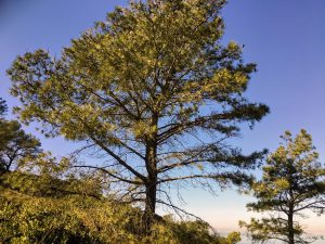 Torrey-Pines-State-Natural-Reserve