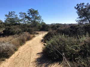 Beach Trail Torrey Pines State Natural Reserve