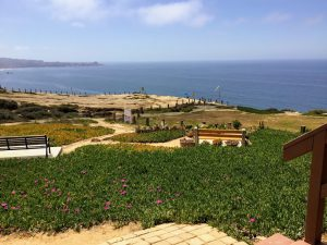 Cliffhanger Cafe view ice plant trails ocean