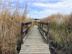 Bridge through Cattails