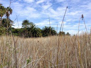 Cattails Freshwater Lagoon