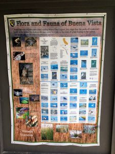 Flora and Fauna of Buena Vista Poster