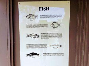 Fish Poster Buena Vista Lagoon