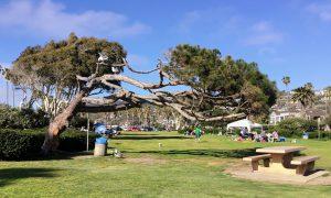 La Jolla Shores Kellogg Park