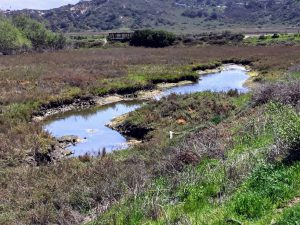 Water hole at San Elijo Lagoon