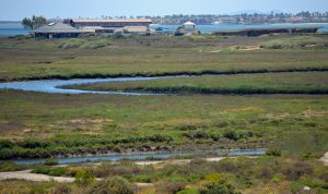 San Diego Bay Wildlife Refuge
